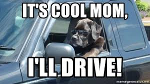Dog Driving Meme - it s cool mom i ll drive dog driving car meme generator