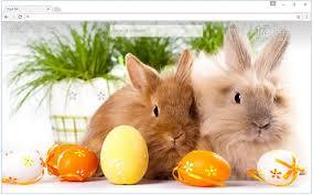 rabbit bunny bunny rabbit wallpaper hd rabbits themes free addons