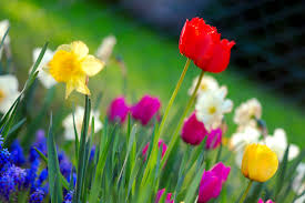 Spring Flower Garden The 5 Flowers Jacksonville Homeowners Should Consider