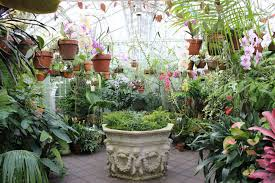 san francisco native plants places to visit archives anne of green gardens