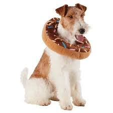 Target Dog Halloween Costumes Hocus Pocus Halloween Costumes Pup Phinney U0027s Friends Blog