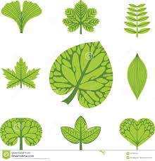 Different Types Of Leaves Royalty Free Stock Images Image 25338379