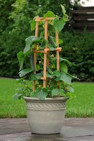 Home And Garden Design Show San Jose by 25 Best Container Vegetable Gardening Ideas On Pinterest