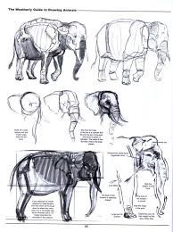 the weatherly guide to drawing animals joe weatherly fine art