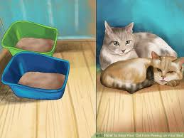 peeing the bed how to stop your cat from peeing on your bed 10 steps