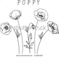 poppy flower stock images royalty free images u0026 vectors