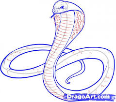 learn how to draw a king cobra snakes animals free step by step