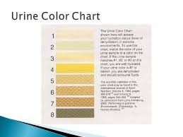 the color of water pages sports medicine i hyperthermia u2013 condition in which for one