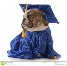 dog graduation cap and gown pet graduation royalty free stock photo image 38177495