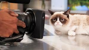 New Grumpy Cat Meme - grumpy cat gets movie deal do animals have likeness rights