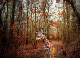bored at home create your own zoo i used my iphone to create a way for this giraffe to leave the zoo