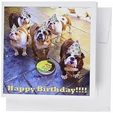 3drose bulldog birthday greeting cards 6 x