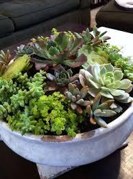 indoor succulent garden for the home pinterest 70 indoor and