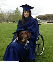 graduation cap and gowns service dog arrives at college graduation in cap and gown becomes