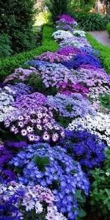 10 low maintenance perennials perennials flower beds and