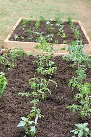 raised bed gardening in texas u2013 exhort me