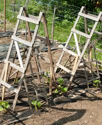 How To Grow Cucumbers On A Trellis Homemade Cucumber Trellis Blogging With Apples