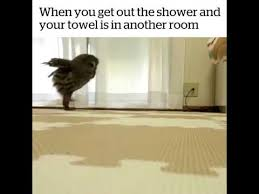 You Re A Towel Meme - when you get out the shower and your towel is in another room