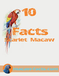 All You Need To Know by Macaw Facts All You Need To Know About Macaw Parrots Red Macaw