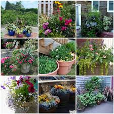 gift plants and plant ideas perfect container garden for you with