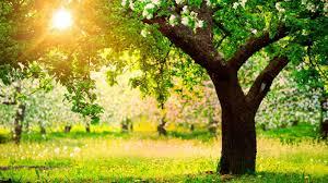 field green splendor tree nature place sun landscape beautiful