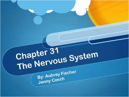 bio chapter 31