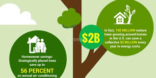 amazing facts and figures about trees infographic portal