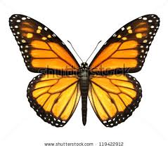 monarch butterfly open wings top view stock photo 119422912
