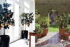 citrus garden inspiration ideas