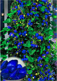 compare prices on small climbing plants online shopping buy low