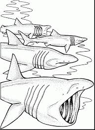 amazing great white shark coloring pages with shark coloring page