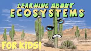learning about ecosystems youtube