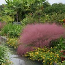 exterior design wonderful landscape with pink muhly grass for