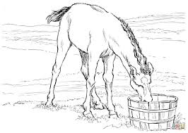 horse colt drinks water coloring page free printable coloring pages