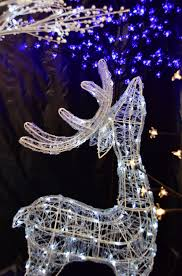christmas scothern nurseries