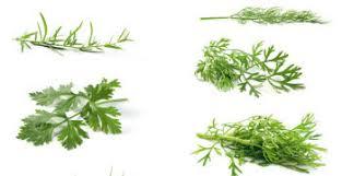 herbes cuisine loisirs la ronde des herbes aromatiques