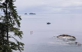 Pacific Coast Preferred Comfort Beautifully Wild British Columbia Pure Wild Adventures