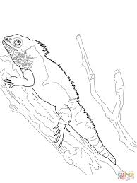 chinese water dragon coloring page free printable coloring pages