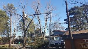 tree service and arborist services in nashville tnfalling timbers