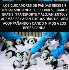 top memes de pandas en español memedroid