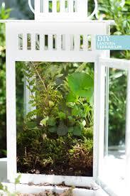 ikea hack diy lantern terrarium ikea hack terraria and plants