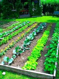 Vegetable Garden Landscaping Ideas Vegetable Garden Landscape Ideas Ghanadverts Club