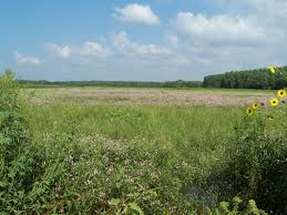 native kansas plants about the refuge flint hills u s fish and wildlife service