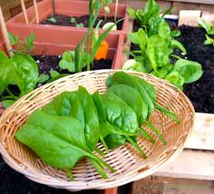 container gardening easy vegetables to grow