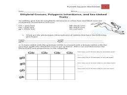 punnett square practice   guillermotullcom with independent assortment worksheet from guillermotullcom