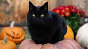 halloween black background pumpkin images of halloween black cats by sc
