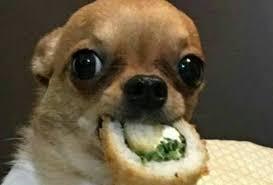 Memes De Chihuahua - 20 pruebas de que los memes de perritos son los mejores