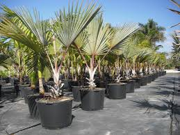 wholesale native plant nursery 57 best buy wholesale plants online images on pinterest buy
