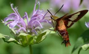 butterfly and moth guide