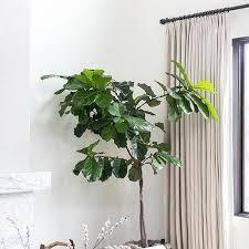 Rubbed Bronze Curtain Rod Oil Rubbed Bronze Curtain Rod Design Ideas